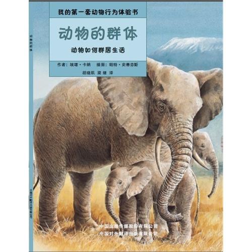 大象 动物 500_500
