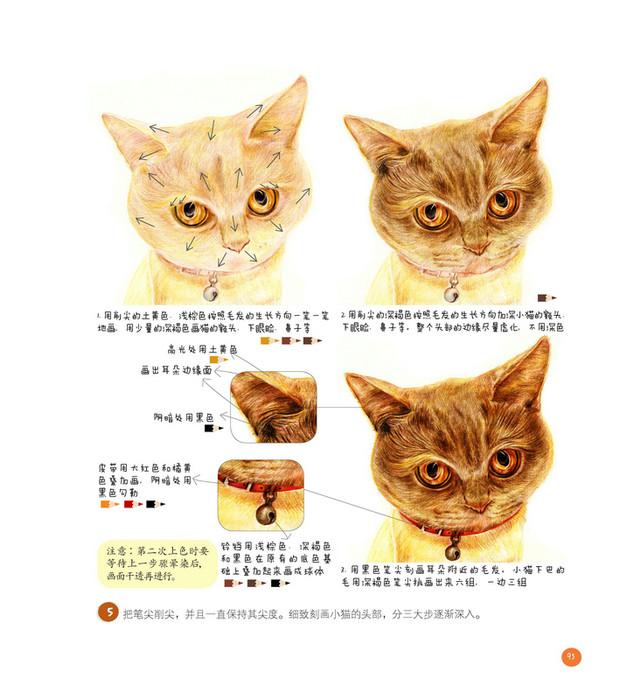 田园猫咪手绘插画