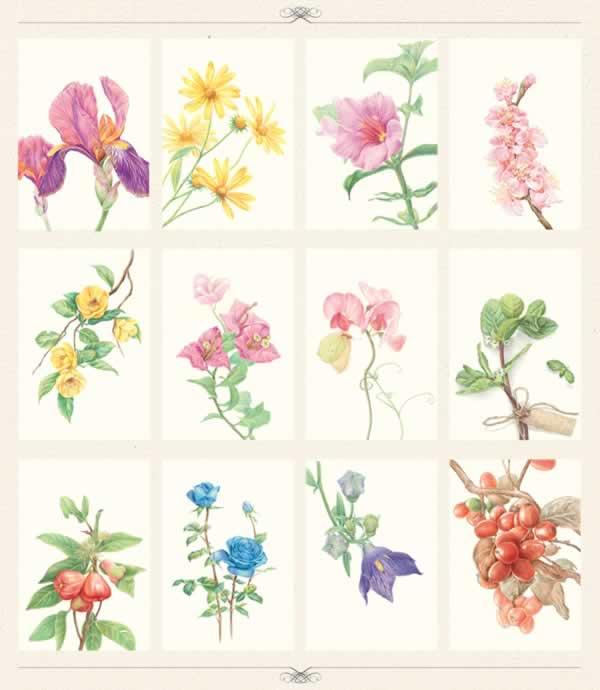 色铅笔的手绘时光~植物绘明信片组