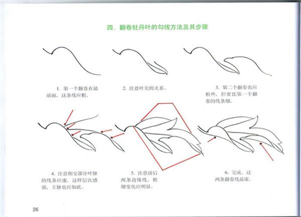 第1章 画工笔牡丹花的基本知识 第2章 牡丹花的结构及名称 第3章 线描