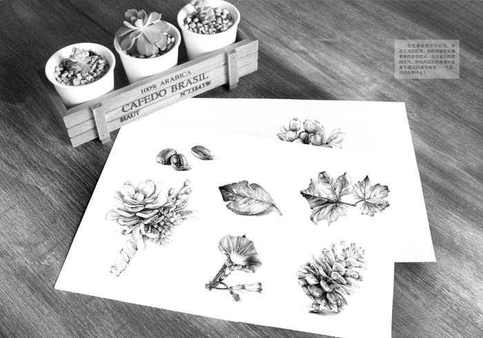 盆栽植物手绘线稿