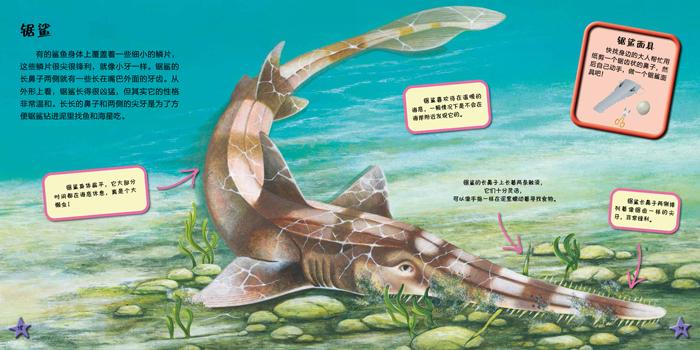 我爱动物小百科 鲨鱼