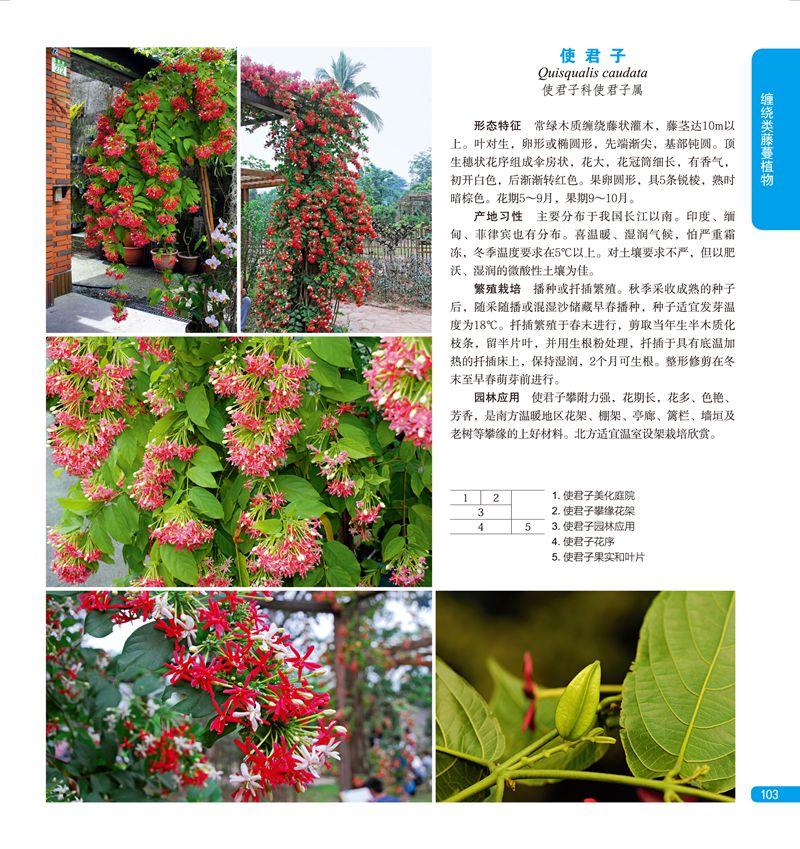 藤蔓植物与景观