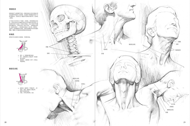 理解人体的解剖特征是人物画的基础。这是本非常出色的书籍,书中收录了一系列具体细致的绘画及人体图形,并从前后左右不同视角解释了骨骼肌肉、结构与人体绘画之间的关系。 《人体解剖与素描》是意大利经典素描训练教程系列中的一本,该系列丛书自引进出版以来得到了广大读者的喜爱。书中的知识点描述详尽,文字简单易懂,图例还可用来临摹描绘,非常适合美术专业学生、画家和业余爱好者使用。