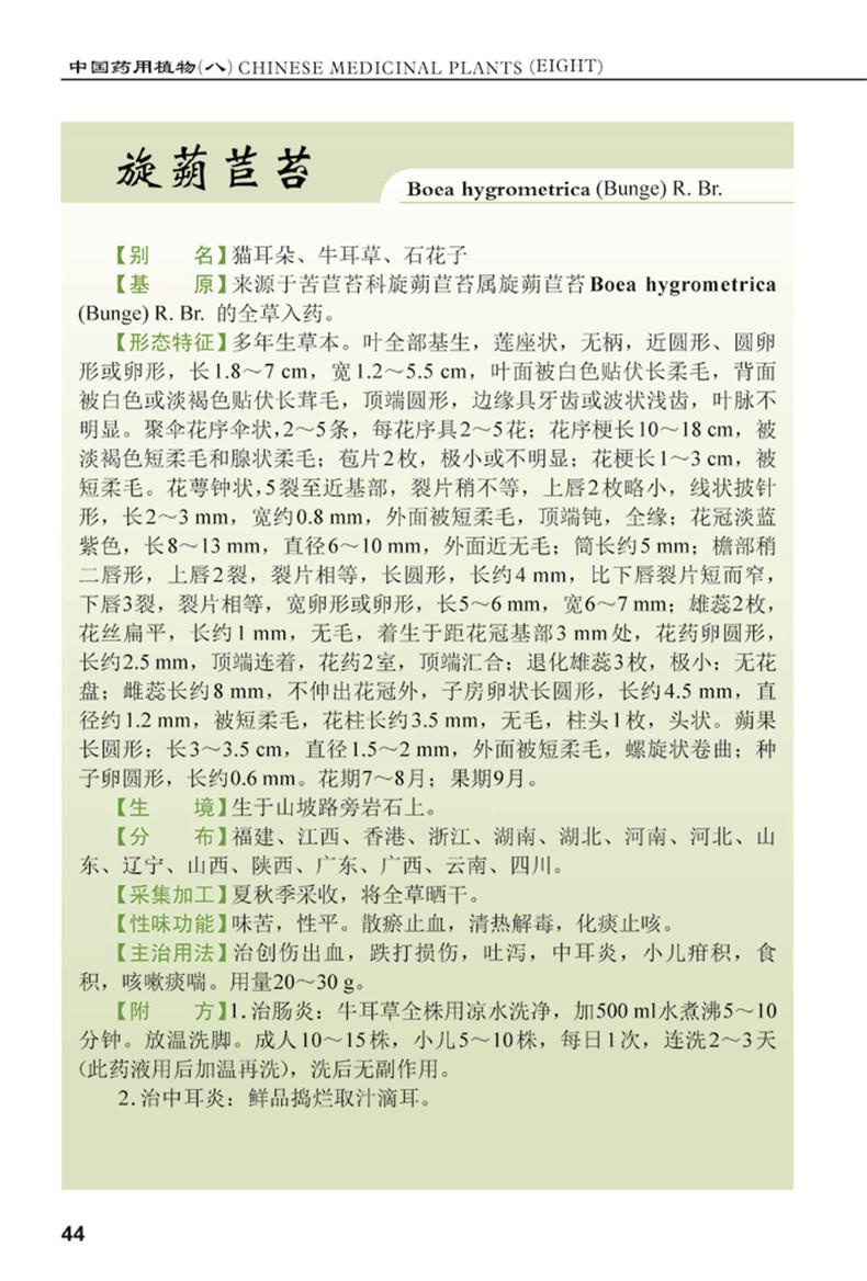 光萼唇柱苣苔