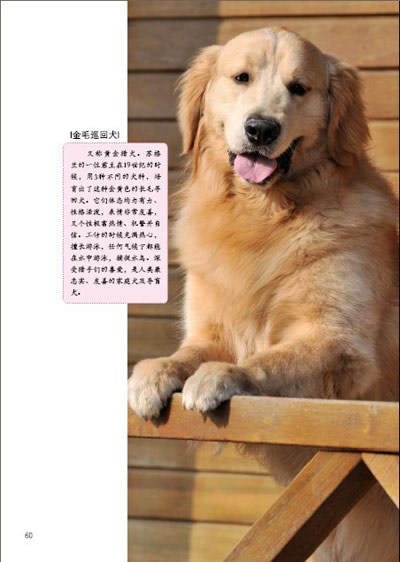 一只狗的遗嘱(畅销数亿册,曾令全世界人为之流泪的不朽大作);; 《一只