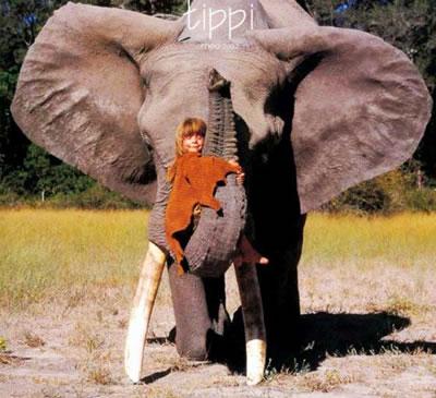 正版童书 我的野生动物朋友 风靡世界的奇人奇书