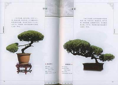 文字部分着重介绍通派盆景的艺术风格,制作盆景的主要树种,树木盆景的