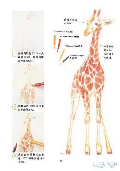 色铅笔的动物日记(风靡亚洲的秋草爱,让你爱上色铅笔,爱上画画,爱上