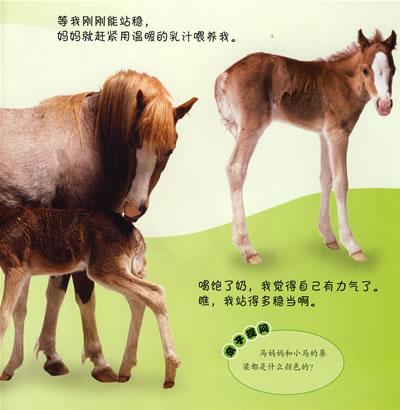 【小马】看小动物成长10:小马