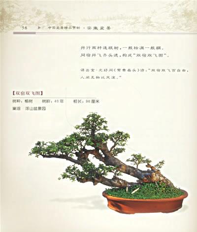 杜鹃枯木盆景图片