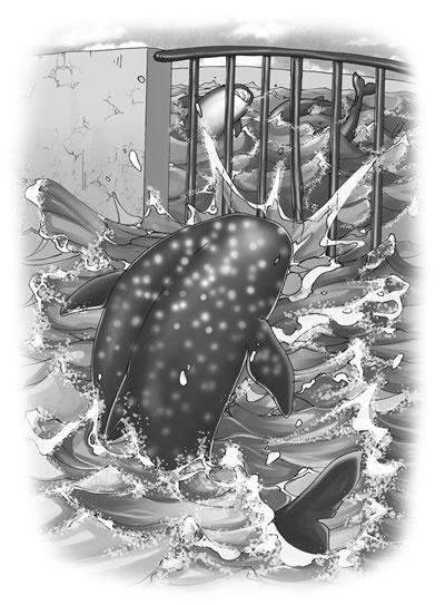 【少儿书籍批发】猫武士动物小说系列之5食人鲨 儿童图书 正版