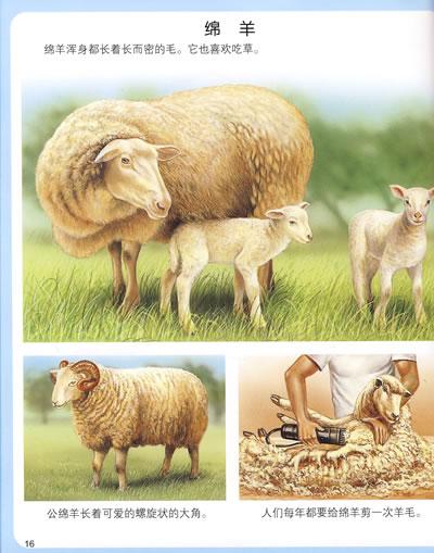 幼幼知识全库(赠精美练习册及卡片)2——可爱的动物