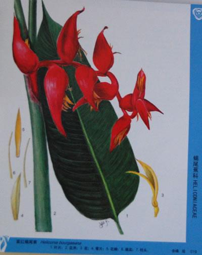 平面图例 手绘植物图例 植物手绘线稿.