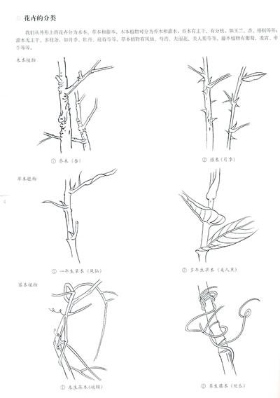 工笔秋葵图步骤